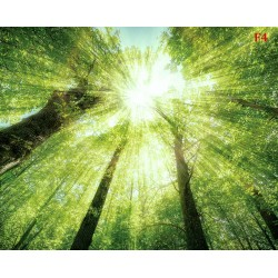 Wallpaper Mural green forest view from below crown trees