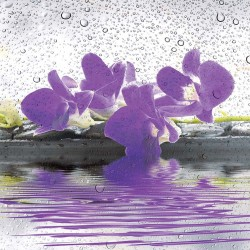 Photo mural spa stones with flowers and water drops in 2 colors
