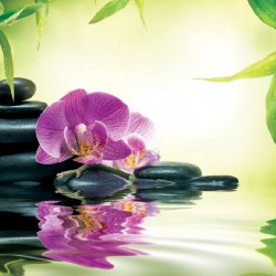 Wallpapers spa composition with orchid and stones