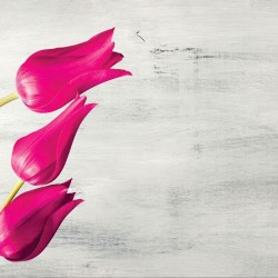 Wallpapers tulips over grey background in 3 colors