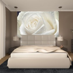 Wall mural big rose in cream colour