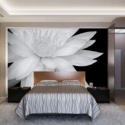 Photo mural big white lily