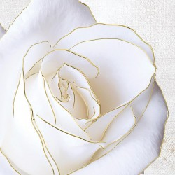 Photo mural large white rose with a gold border