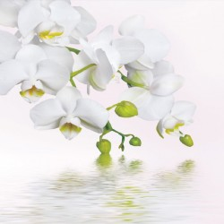 Wall mural orchid twig over water in 2 colours