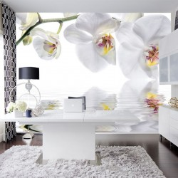 Photo mural white orchids with water reflection