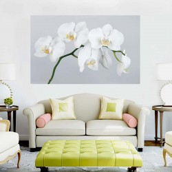 Photo mural white orchid on grey background