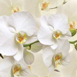 Photo mural twig white orchid on the background cream