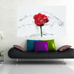 Wallpapers red rose with water splashes