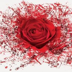 Wall  mural red rose art