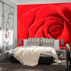 Photo mural rose background in red