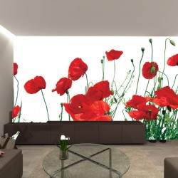 Photo mural beautiful red poppies 2