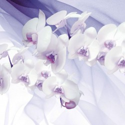 Photo mural orchids on a background of purple silk shade