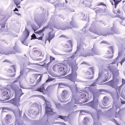 Photo murals a wall of purple roses