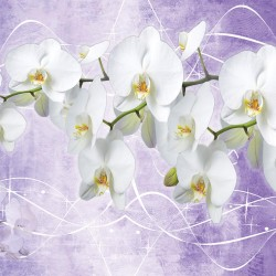 Photo mural orchid branch in purple background