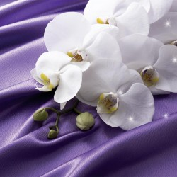 Photo mural white orchids on a purple silk abstract background