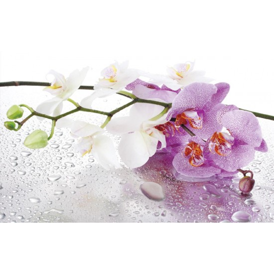 Photo mural orchid branch in purple gamut