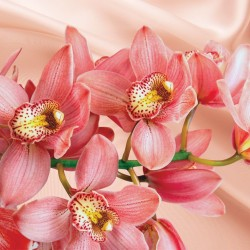 Photo mural coral orchid background silk in 2 colors