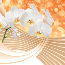 Wallpapers mural composition with white orchids and spiral 3d