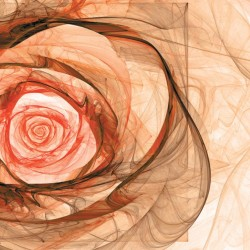 Photo mural modern abstraction rose in 2 colors
