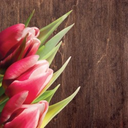 Wallpapers mural pink tulips on wooden background