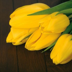 Photo mural bouquet from yellow tulips on wooden background
