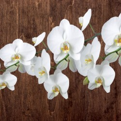 Wall mural orchid branch on wooden background 3