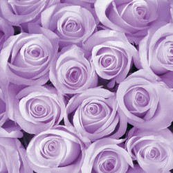 Wall murals bouquet of pink and purple roses in 2 colors