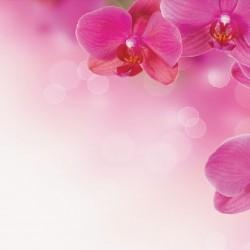 Wall murals wonderful orchids