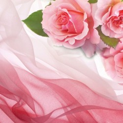 Wall mural pink roses on silk