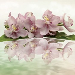 Wall murals pastel composition with orchid twig in two variants