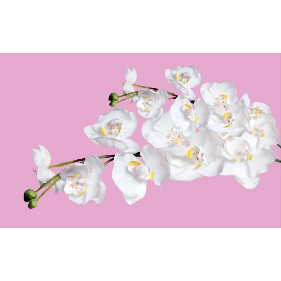 Wallpapers mural orchid branches on pink coat background