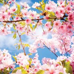 Photo murals twig spring blossom tree blue sky