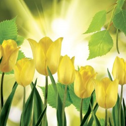 Wallpapers view of yellow tulips with sunshine