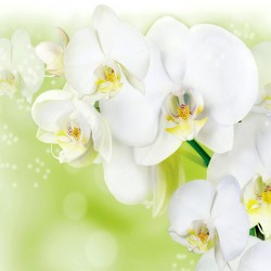 Photo murals twig white orchid on a light green background