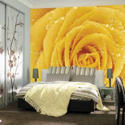 Photo mural yellow rose with water drops