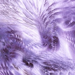 Wallpapers mural feathers in purple