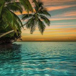 Photo mural ocean sunset with hanging palm trees in 2 variants