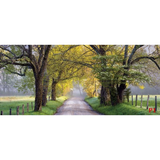 Photo mural view road with crowns of trees