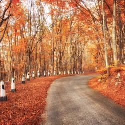 Photo mural autumn landscape road along a forest