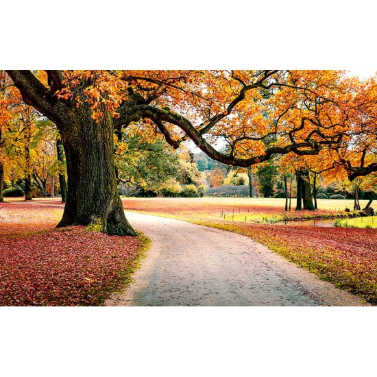 Photo mural autumn landscape tree with hanging branches