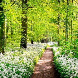 Photo mural green forest with a meadow of beautiful flowers