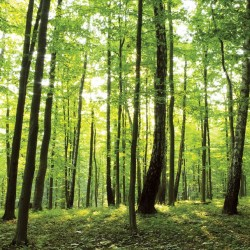 Photo mural green forest view