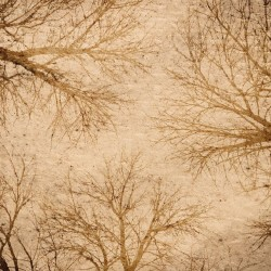 Photo mural artistic brown branches