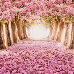 Photo mural forest path from pink trees