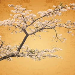 Wallpapers mural japanese tree with blossoms in orange gamut