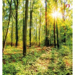 Photo mural green Forest model 5