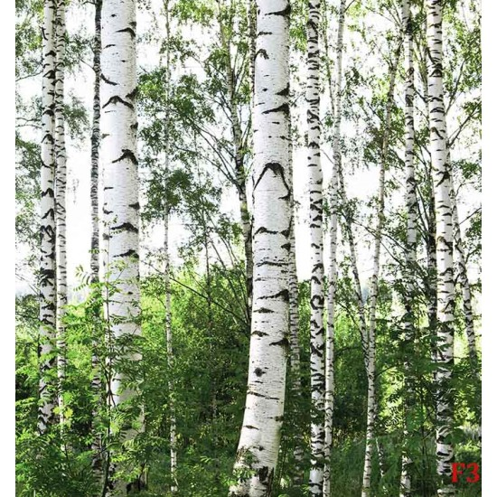 Photo mural birch forest model 3