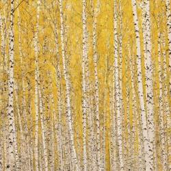 Photo mural birch forest in yellow