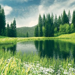 Wallpapers view with lake near a pine forest