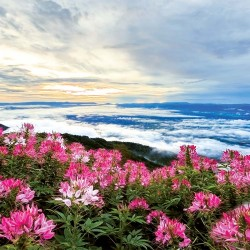 Photo mural panorama view pink flowers with clouds horizon